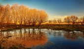 Beautiful autumn landscape, dry trees, blue sky, tree reflected in lake, seasons change, sunny day,