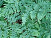 Ferns background