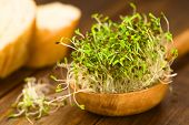 stock photo of germination  - Sprouted alfalfa seeds on wooden spoon  - JPG