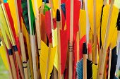 picture of fletching  - A group of arrow fletchings in different colors.