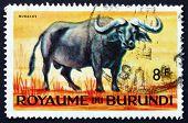 Postage Stamp Burundi 1964 African Buffalo, Syncerus Caffer
