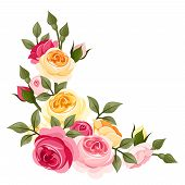 stock photo of orange blossom  - Vector corner with pink and yellow English roses - JPG