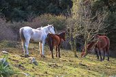 pic of great horse  - Herd of horses grazing in the field of the Altesina mountain - JPG