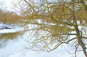 A Strange Kind Of Tree On The River Background