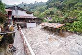 Coffee Plantation