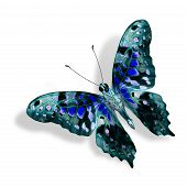 Beautiful Nice Blue Butterfly Isolated On White Background