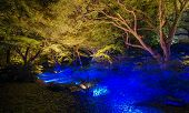 pic of kanto  - Seasonal illuminations around Christmas day at Rikugien Garden Tokyo Japan - JPG