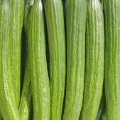 fresh cucumbers as green pattern