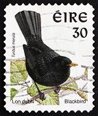 Postage Stamp Ireland 1998 Common Blackbird, Bird