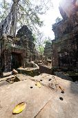 Ta Prohm Temple At Angkor Wat, Siem Reap, Cambodia.