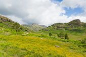 Langdale pikes Blea Tarn Lake District Cumbria England UK between Great Langdale and Little Langdale