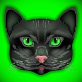 cat face eyes vector kitten bow hair facial portrait