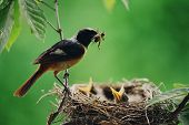 picture of bird-nest  - Wild Birds - JPG