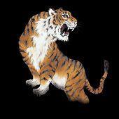 Japanese tiger