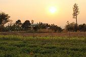 Vegetable Garden And Sunset