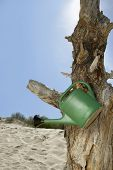 Watering can hanging on dead tree at beach
