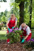 Man And Woman Planting A Flower
