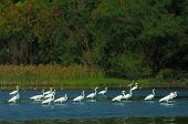 birds play in waterland