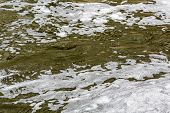 Foam On Polluted Water
