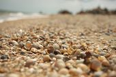 picture of azov  - Seashells on the shore of the Sea of Azov - JPG