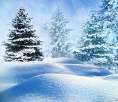 winter snow covered fir trees on mountainside