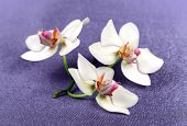 Beautiful Flowers Orchid