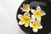 frangipani flower in the coconut shell
