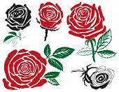 picture of rose bud  - illustration bud red roses on a white background - JPG