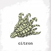 Hand Drawing Illustration Of Citron.