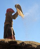 Nepal Woman Cleaning Corn By Primitive Method