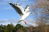 Flying Bird Open Wings