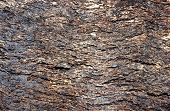 texture cork