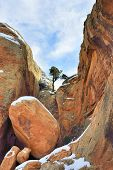 Tree Growing On The Rock In Devil's Garden In Arches National Park, Utah In Winter