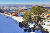Green Tree In Canyonlands National Park, Utah In Winter