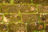 Old Red Brick Wall Grown With Grass And Moss