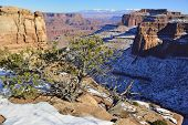 Green Tree In Shafer Canyon In Canyonlands National Park, Utah In Winter