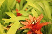 picture of bromeliad  - Bromeliad flowers in garden at the park - JPG