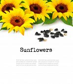 stock photo of sunflower  - Sunflowers background with sunflower seeds - JPG