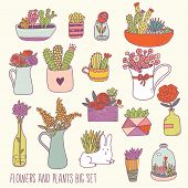 picture of house-plant  - Bright flowers and plants big set in vector - JPG