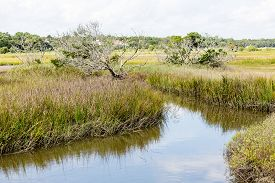 stock photo of marshes  - A wetland marsh with grasses and trees - JPG