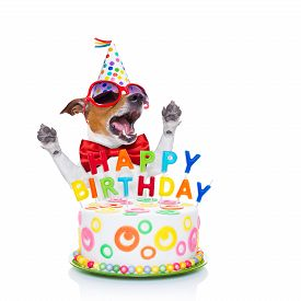 stock photo of birthday hat  - jack russell dog as a surprise singing birthday song behind funny cake wearing red tie and party hat isolated on white background - JPG