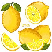 Постер, плакат: Lemon Isolated Vector