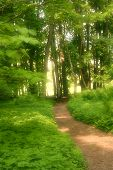 Dreamy Trail