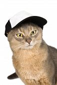 Abyssinian cat in baseball cap