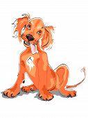 Setter Puppy
