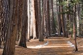 Yosemite Walking Path