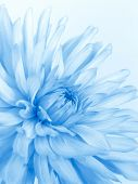 Soft Blue Flower poster