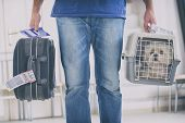 little dog in the airline cargo pet carrier at the airport after a long journey poster