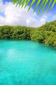 foto of cenote  - cenote mangrove with clear turquoise water in Mayan Riviera Mexico - JPG