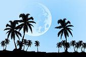 hermoso paisaje (palmeras de la luna)